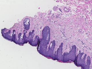 Figure 3. Detail view of abnormal findings.